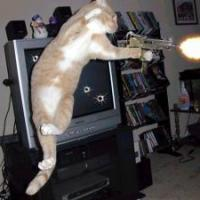 Cats With Guns