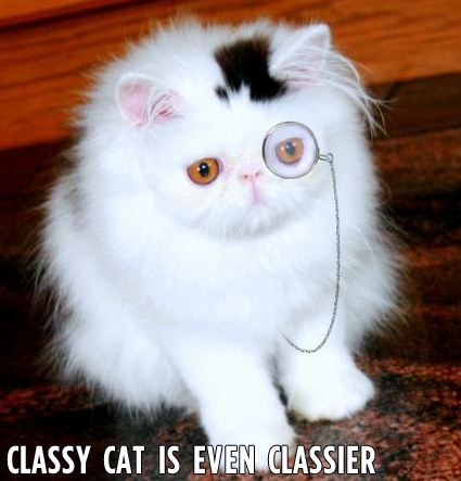 IMAGE(http://thedingleberry.files.wordpress.com/2011/11/classy-cat-is-even-classier-17398-1281572456-4.jpg)