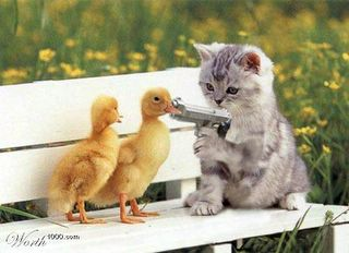 cat pointing gun at baby ducks