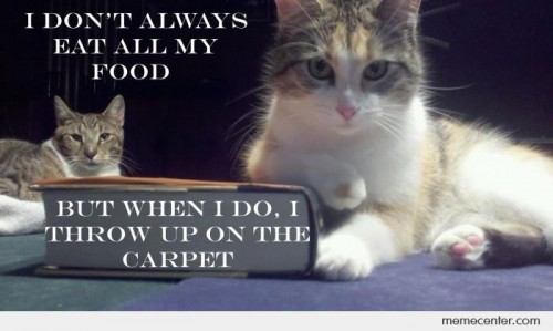 Why Do Cats Puke On The Carpet Thedingleberry Wordpress Com