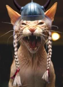 angry-viking20kittie20braids.jpg